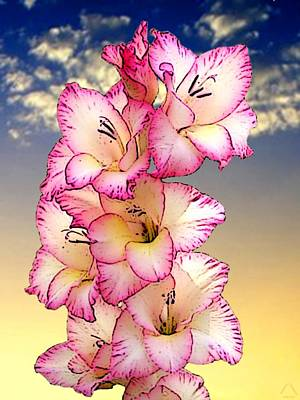 Glorious Gladiola Poster