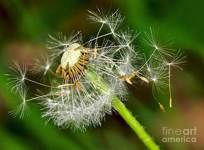 Glowing Dandelion Spores Poster