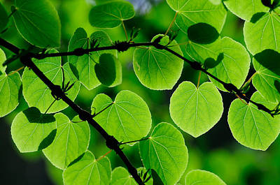 Glowing Heart Shaped Leaves Poster