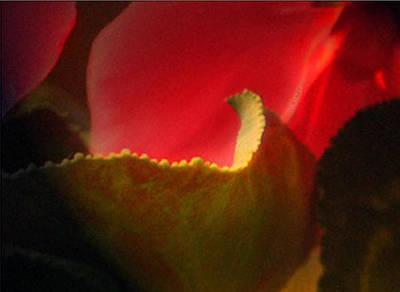 Glowing Petals Poster
