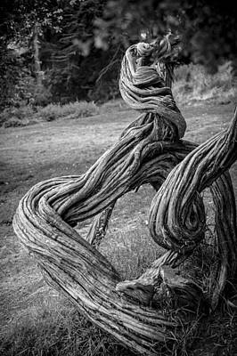 Gnarled Tree Poster by Anthony Citro