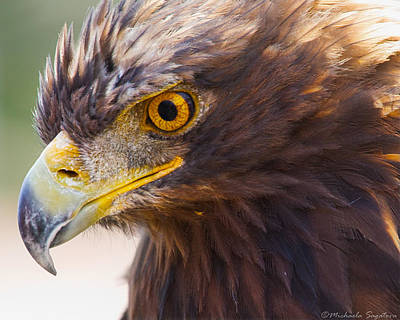 Golden Eagle Portrait Poster by Michaela Sagatova