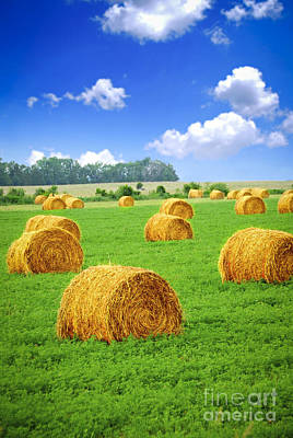 Golden Hay Bales In Green Field Poster