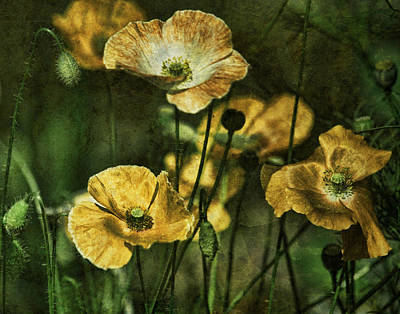 Golden Poppies Poster by Bonnie Bruno