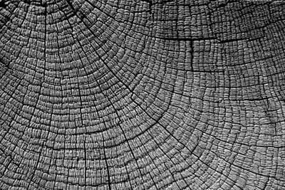 Detail Of Wood Grain Poster