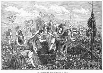 Grape Harvest, 1874 Poster