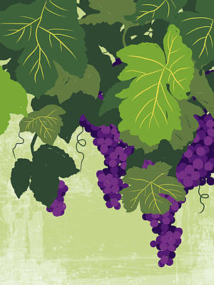 Graphic Illustration Of Wine Grapes On The Vine Poster