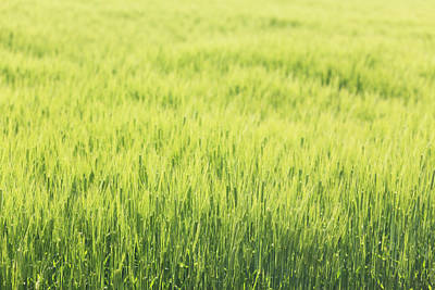 Grass Growing In Field Poster