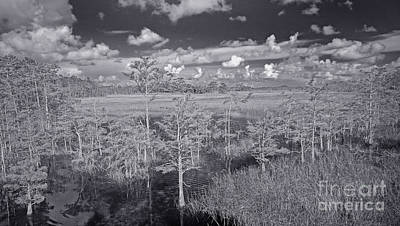 Grassy Waters 3 Bw Poster by Larry Nieland