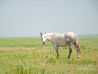 Gray On Prairie Poster