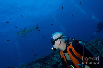 Gray Reef Shark With Diver, Papua New Poster by Steve Jones