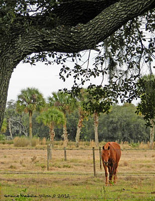 Grazing Lone Horse Poster