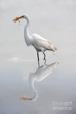 Poster featuring the photograph Great Egret With Lunch by Dan Friend