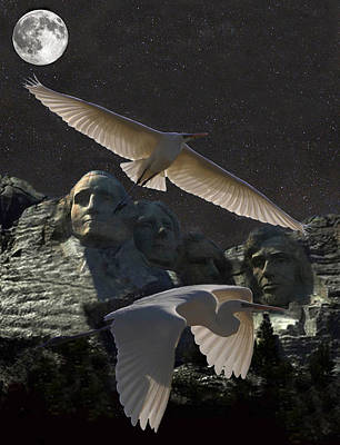 Great Egrets Mount Rushmore  Poster