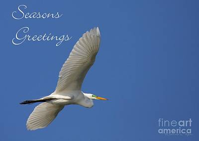 Great White Egret Holiday Card Poster