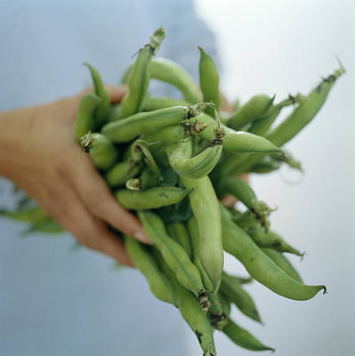 Green Beans Poster by David Munns