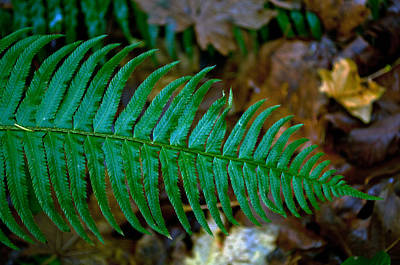 Green Fern Poster by Tikvah's Hope