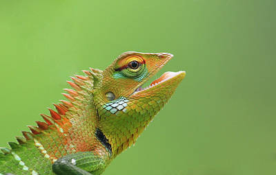 Green Forest Lizard Poster by Saranga Deva De Alwis