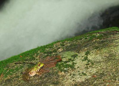 Green Frog At Waterfall Poster by John Burk