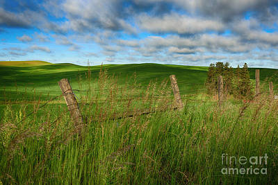 Green Green Grass Of Home Poster by Beve Brown-Clark Photography