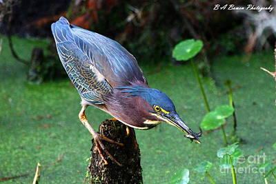 Green Heron Nabs A Fish Poster