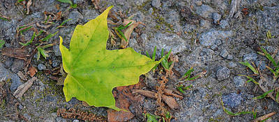 Green Leaf On Ground Poster