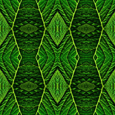 Green Leaf Reflection Poster by  Onyonet  Photo Studios