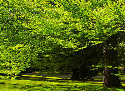 Green Trees In Stanley Park Poster