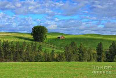 Greener Pastures Poster by Beve Brown-Clark Photography