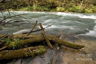 Greer Spring Branch Poster by Chris Brewington Photography LLC