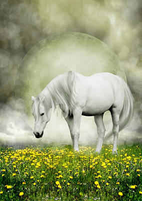 Poster featuring the photograph Grey Pony In Field Of Buttercups by Ethiriel  Photography