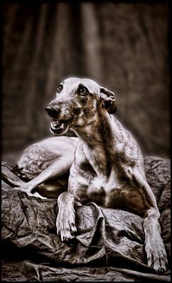 Poster featuring the digital art Greyhound by Mary Morawska