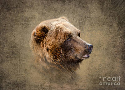 Grizzly Portrait Poster by Betty LaRue