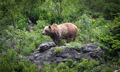 Poster featuring the photograph Grizzly by Ronda Broatch