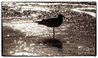 Gull In Silver Tidal Pool Poster by Jim Moore