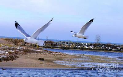 Gulls In Flight 2 Poster