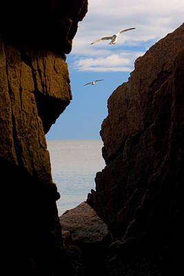 Poster featuring the photograph Gulls Of Acadia by Brent L Ander