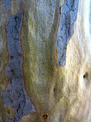 Poster featuring the photograph Gum Tree Bark by Roberto Gagliardi