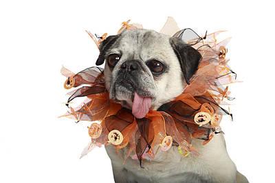 Halloween Pug Poster by Mlorenzphotography