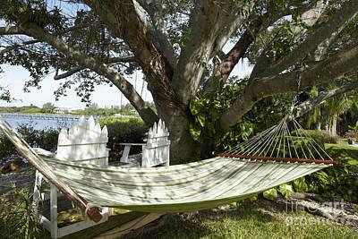 Hammock Under A Tree Poster