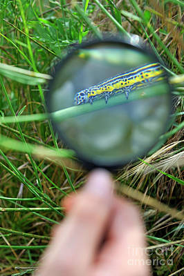 Hand With Magnifying Glass Looking At A Worm On Grass Poster