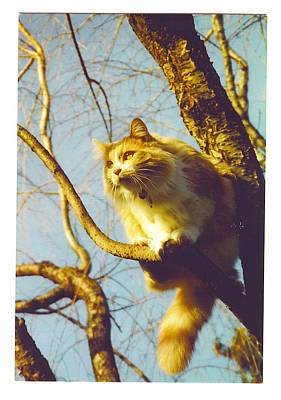 Hanserelli In Tree Poster