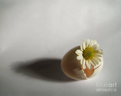 Hatching Flower Photograph Poster