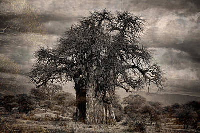 Haunted African Baobabs Tree Poster