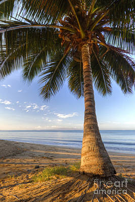 Hawaiian Coconut Palm Sunrise Poster by Dustin K Ryan