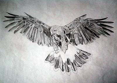 Hawk Poster by Robert Lance