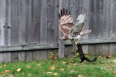 Hawk The Hunter Poster