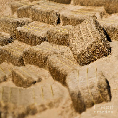 Hay Bales Poster by Eddy Joaquim