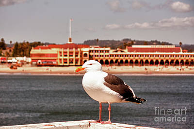 hd 384 hdr - Lone Seagull Poster by Chris Berry
