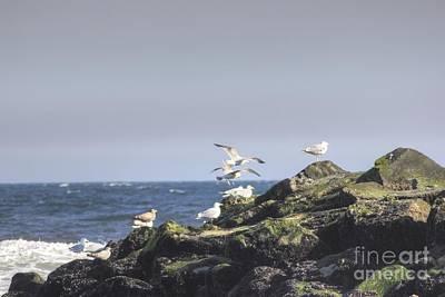 Hdr Seagulls At Play Poster